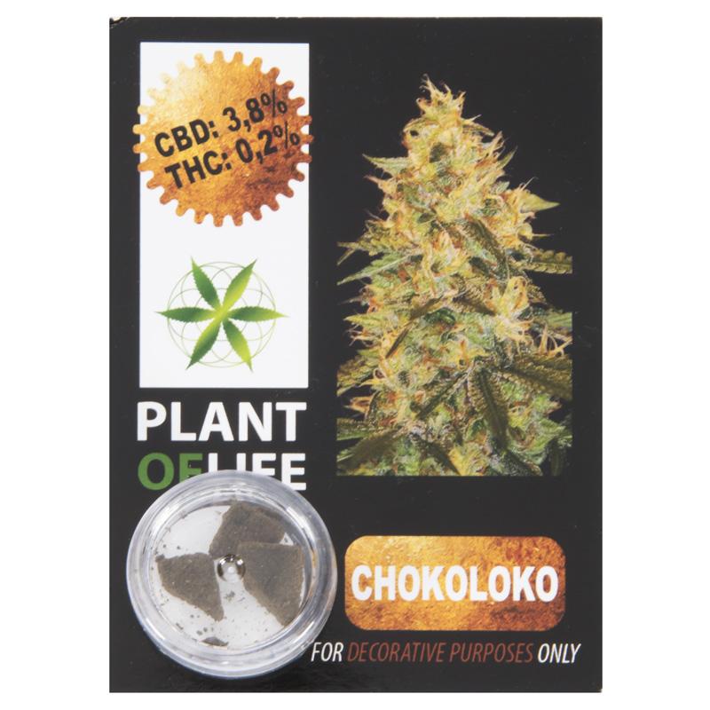 3,8 % CBD Solid Chocoloco