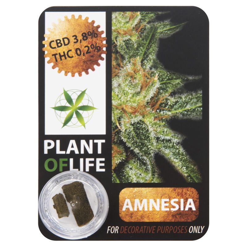 3,8 % CBD Solid Amnesia Haze